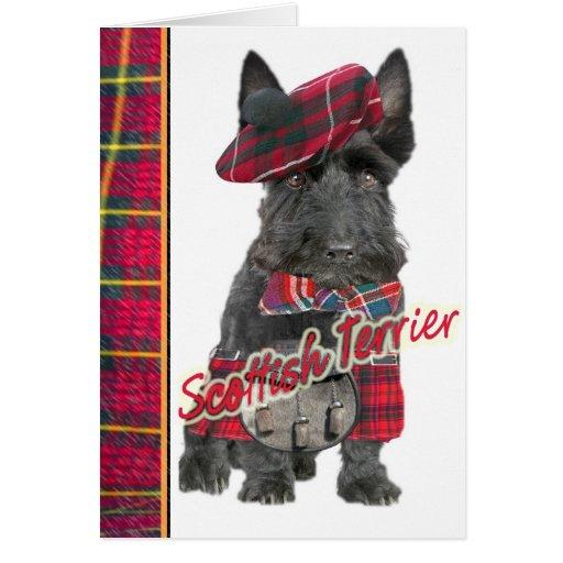 Scottish Terrier in  Kilt greeting cards