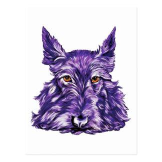 Scottish Terrier in Purple Postcard