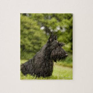 Scottish Terrier Jigsaw Puzzle