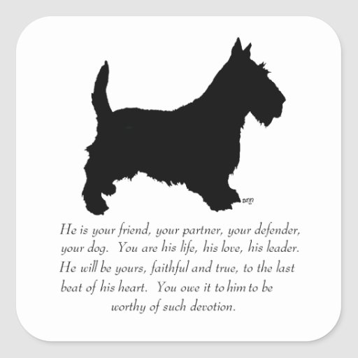 Scottish Terrier Keepsake - MALE Dog Square Stickers