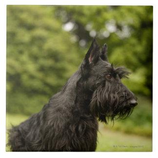 Scottish Terrier Large Square Tile