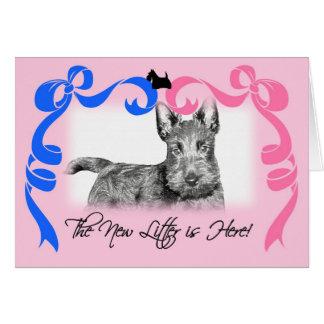 Scottish Terrier New Litter Announement Card