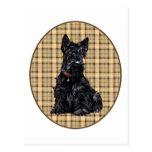 Scottish Terrier on Plaid Postcard