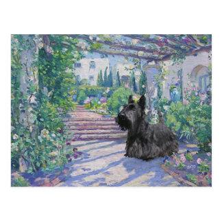 Scottish Terrier Post Card