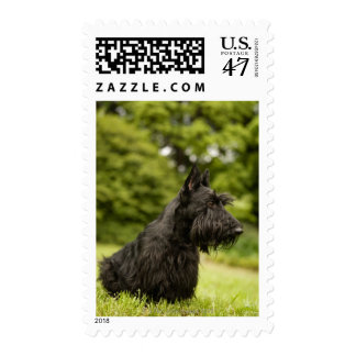 Scottish Terrier Postage