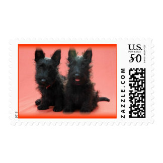 Scottish Terrier Puppies Postage