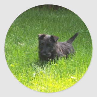 SCOTTISH TERRIER PUPPY CLASSIC ROUND STICKER