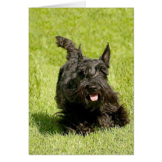Scottish Terrier Running Free Card