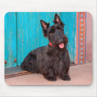 Scottish Terrier sitting by colorful doorway Mouse Pad