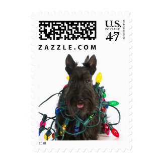 Scottish Terrier Tangled In Christmas Lights Postage