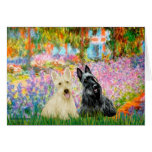 Scottish Terrier (two BW) - Garden Greeting Cards