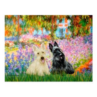 Scottish Terrier (two BW) - Garden Postcard