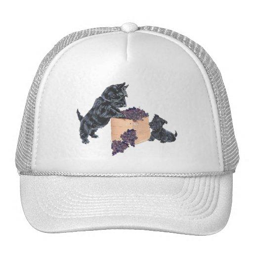Scottish Terriers Grape Harvest Mesh Hat