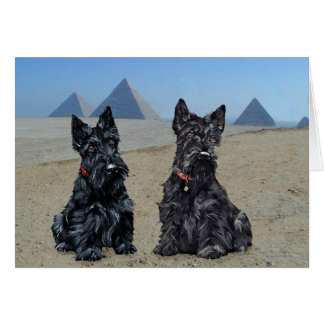Scottish Terriers in Egypt Card