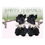 Scottish Terriers Party Animal Postcards