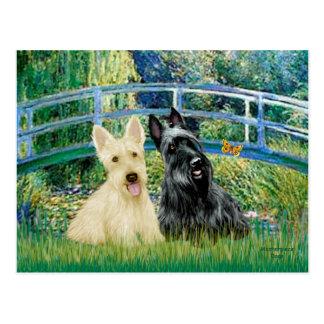 Scottish Terriers (two-BW) - Bridge Postcard