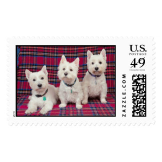 Scottish Terriers With Plaid Postage Stamp