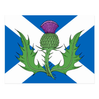 Scottish Thistle and Saltire Postcard