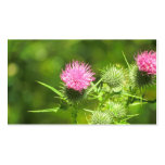 Scottish Thistle Business Card Templates