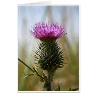 Scottish Thistle Notecard Cards
