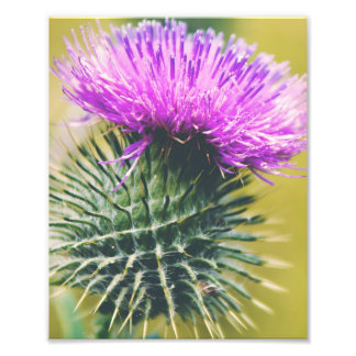 1000  images about Thistle Art on Pinterest | Thistles, Scottish ...