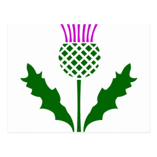 Scottish Thistle Postcard