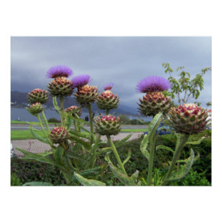 Scottish Thistle Poster