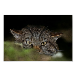 Scottish wildcat poster