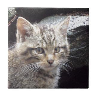 Scottish Wildcat Tile
