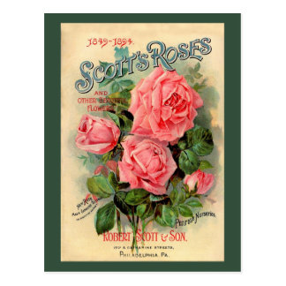 Scotts Roses Advertisement Post Cards