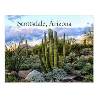 Scottsdale Succulent Sunset Postcard