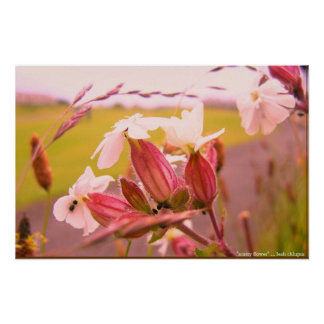 scotty flower poster