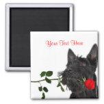 Scotty Puppy Red Rose Valentine Design Magnet