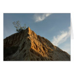 Scraggly Torrey Pine at Sunset California Coast Card