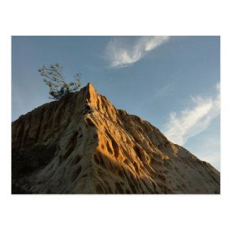 Scraggly Torrey Pine at Sunset California Coast Postcard