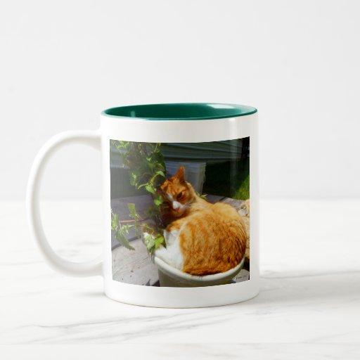 Scrapper en un pote tazas de café