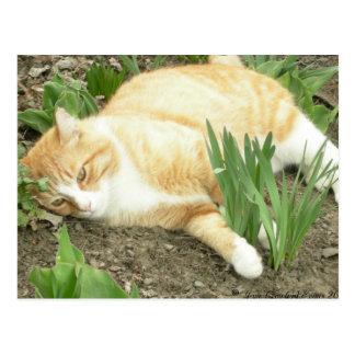 Scrapper in the garden postcard
