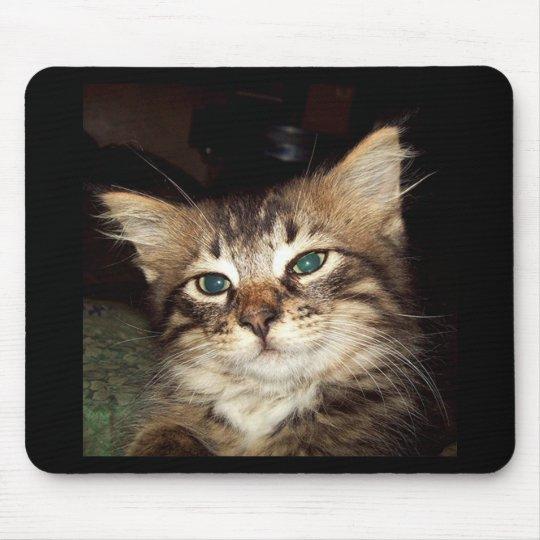 Scrapper Kitten Mouse Pad