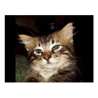 Scrapper Kitten Postcard