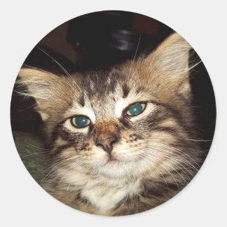 Scrapper Kitten Round Sticker