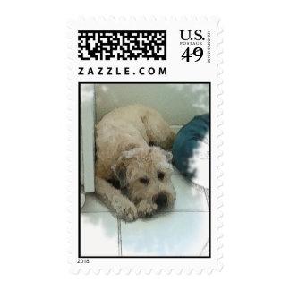 Scraps Stamp