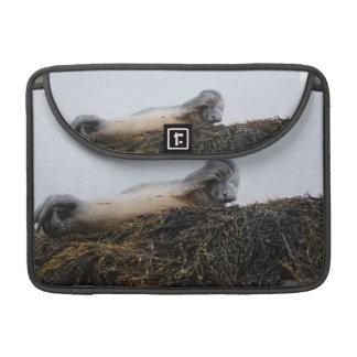 """Scratching Seal 13"""" MacBook Sleeve Sleeves For MacBooks"""