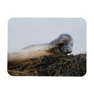 Scratching Seal Flexible Magnet
