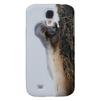 Scratching Seal iPhone 3G Case Samsung Galaxy S4 Covers