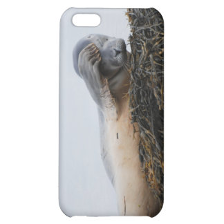 Scratching Seal iPhone Case iPhone 5C Cover