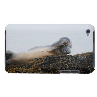 Scratching Seal iTouch Case iPod Touch Cover