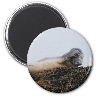 Scratching Seal Magnet