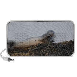 Scratching Seal Speakers