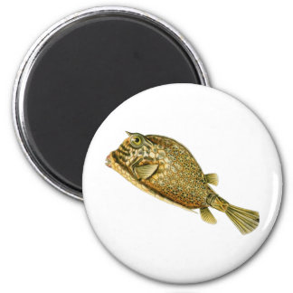 Scrawled cowfish 2 inch round magnet