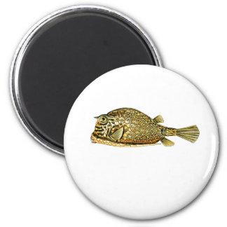 Scrawled cowfish 2 inch round magnet